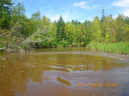 Riparian ash forest @ Pokegama River, Superior, WI